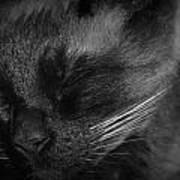 Sweet Dreams In Black And White Art Print