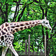 Sweet Giraffe Art Print