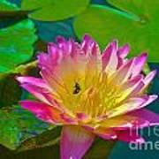 Sweet Lilly Nectar Art Print