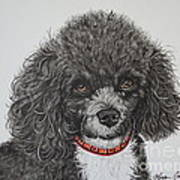 Sweet Miss Molly The Poodle Art Print