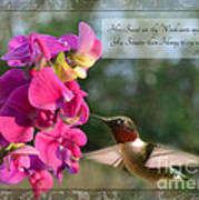 Sweet Pea Hummingbird Iv With Verse Art Print by Debbie Portwood