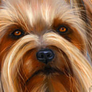 Sweet Silky Terrier Portrait Art Print