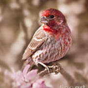 Sweet Songbird Art Print