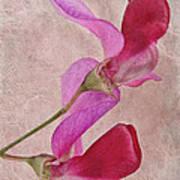 Sweet Textures 2 Art Print