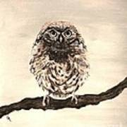 Sweetest Owl Art Print