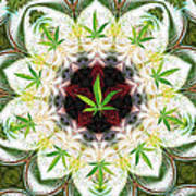 Sweetleaf Mandala Art Print