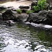 Swimming Hippo Art Print