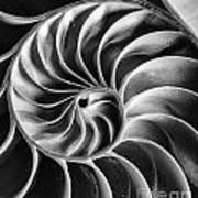 Swirl IIi Art Print