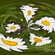 Swirl Of Daisies Art Print