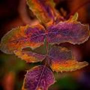 Swirling Leaves Art Print