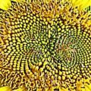 Swirling Sunflower Bloom Art Print