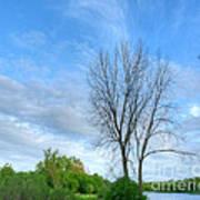 Swirly Sky And Tree Art Print