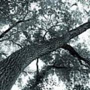 Swirly Tree Art Print