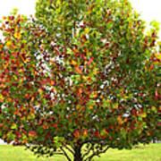 Sycamore Tree Art Print