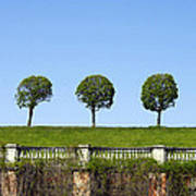 Symmetric Trees Over Old Fence Art Print
