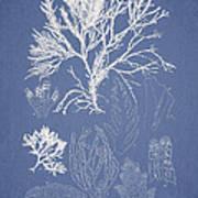 Symphocladia Gracilis  Art Print