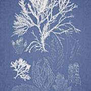Symphocladia Gracilis  Art Print by Aged Pixel