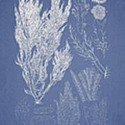 Symphocladia Linearis Art Print by Aged Pixel