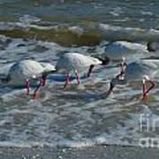 Synchronized Beach Combing Art Print