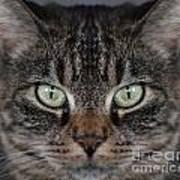 Tabby Cat Face Art Print
