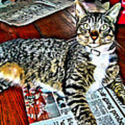 Tabby Cat On Newspaper - Catching Up On The News Art Print