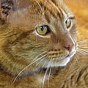 Tabby Cat Portrait Art Print