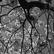 Tabebuia Tree 1 Art Print