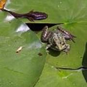 Tadpole And Frog Art Print
