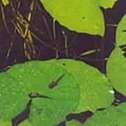 Tadpoles Art Print