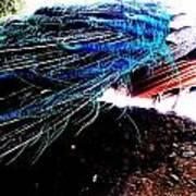 Tail Of Peacock Art Print