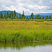 Tall Grasses In Swan Lake In Grand Teton National Park-wyoming Art Print