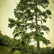 Tall Tree Art Print