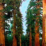 Tall Trees In Yosemite National Park Art Print