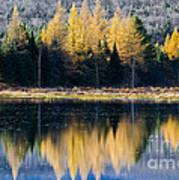 Tamarack Reflections Art Print