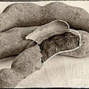 Tamarindo Whole Sepia Art Print