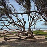Tangle Of California Trees Art Print