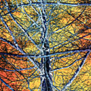 Tangled Web 2 Art Print