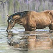 Tango On The Salt River Art Print