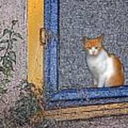 Taos Cat Art Print