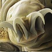 Tardigrade Or Water Bear Foot Sem Art Print by Science Photo Library