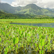 Taro Fields In Hanalei National Art Print