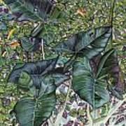 Taro Garden Art Print