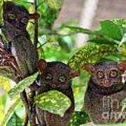 Tarsier Art Print by Lars Ruecker