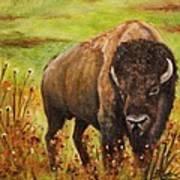 Tatanka, Buffalo  Art Print