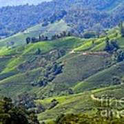 Tea Plantation In The Cameron Highlands Malaysia Art Print