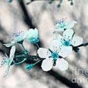 Teal Blossoms Art Print