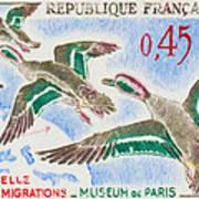 Teal Study Of Migration-museum Of Paris Art Print