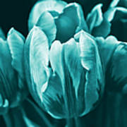 Teal Tulip Flowers Art Print