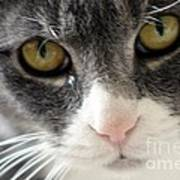 Tears Of A Cat Art Print