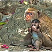 Temple Monkeys Art Print